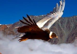 Tour cañon del condor cusco full day